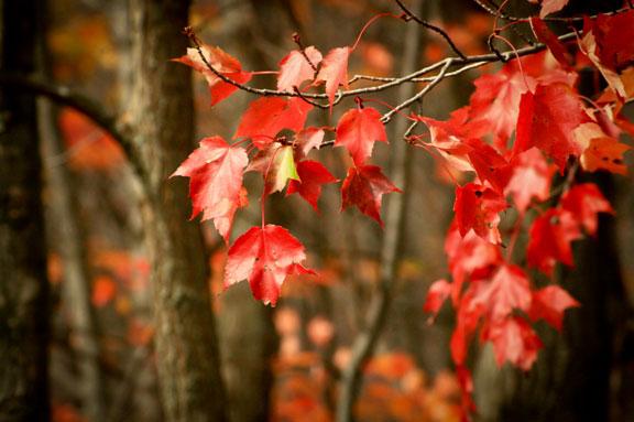 Flaming Tree II ©Rebecca Finch