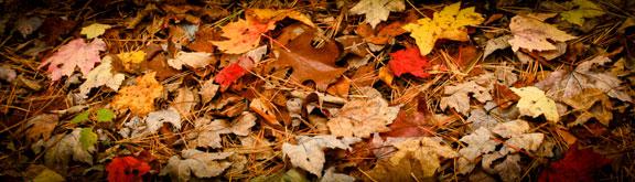 Leaf Contrast ©Rebecca Finch