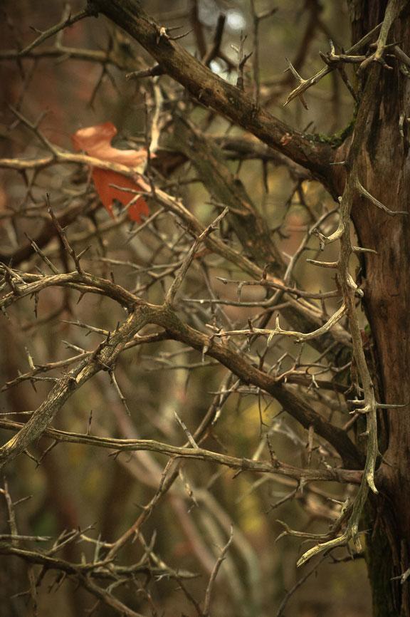 HawTHORN I ©Rebecca Finch
