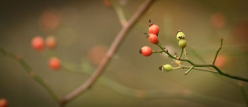 Autumn Berries ©Rebecca Finch