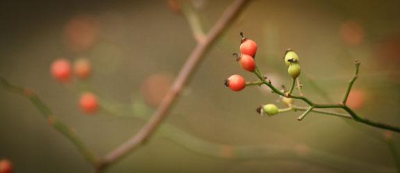 Autumn Berries ©Rebecca Finch